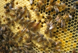 Honeybee Hives: a garden must-have for 2013
