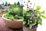BC Gardening, Landscaping Ideas, Lawn Care, Seasonal Planting Tips ...