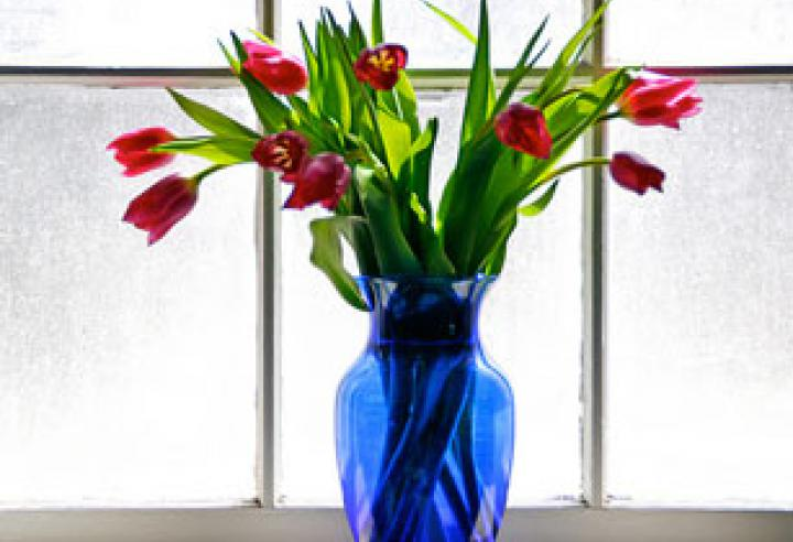 Do Your Tulips Keep Growing In The Vase Bcliving