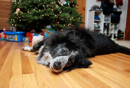 Leave a little something special under the tree for your pet this year