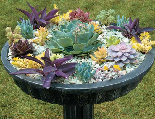 Spectacular succulents container