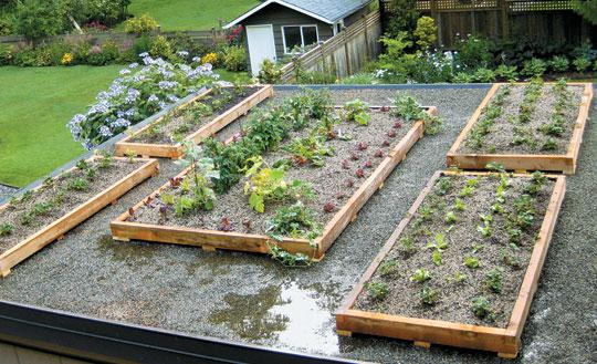 How To Design And Create A Green Roof Garden Senga Lindsay