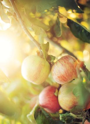 How to grow fruit trees in a small urban garden - Planting fruit trees in the fall a garden full of vigor ...