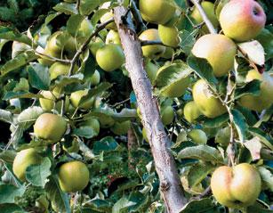 Easy fixes for common fruit orchard problems pest control tips - Planting fruit trees in the fall a garden full of vigor ...