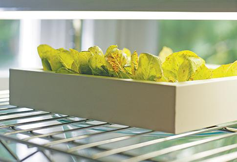 BC Living - Set aside a small area to grow your own micro greens