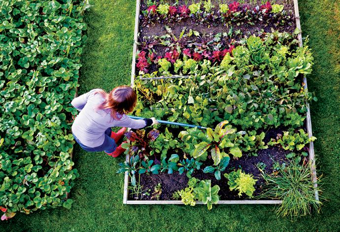Grow a family food garden bcliving for Cuisine garden