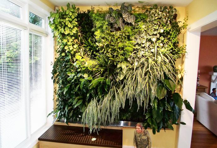 Create an indoor living wall of plants bcliving for Living plant walls